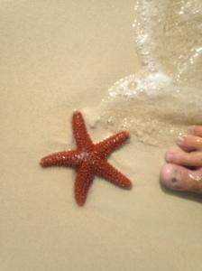 Normal Size Starfish