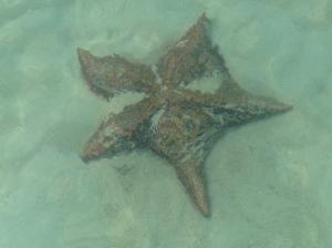 Cat Island Starfish 3ft Dia.