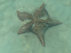 Cat Island Starfish 3ft Dia.